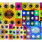 Cheselyn Amato_Geometry of Transformation_Spirographic   Cheselyn Amato_Mandalas, Sunflowers, and Digital Calculations_014